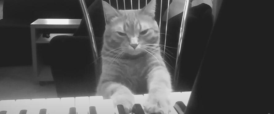 Katten Barney spiller duett